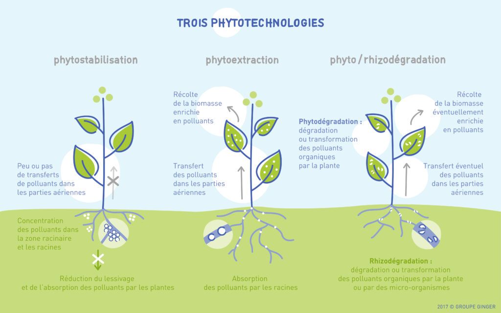 Trois phytotechnologies